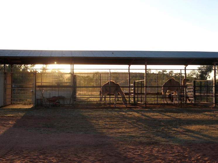 animaux australiens