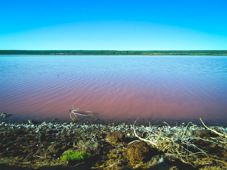 Pink Lake de Port Gregory