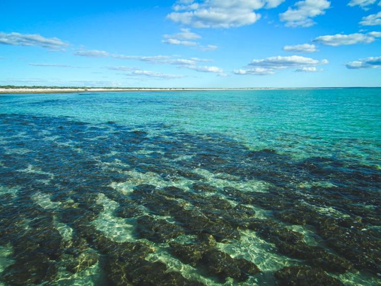 Stromalites à Shark Bay